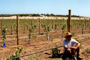 ivybrook-vineyard-early-days