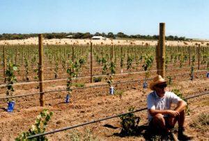 ivybrook-vineyard-early-days