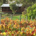 Bed & Breakfast Cottage Amongst Vines